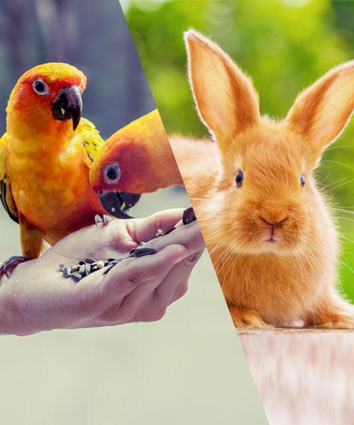 Πτηνά/Μικρά Ζώα
